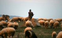 Saatlıda çoban güllələnərək qətlə yetirilib