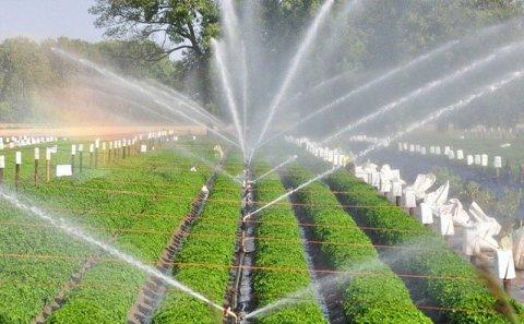 Əkinçinin suyunu kəsən iri məmurlardan xilas olmağın bir yolu var... (Ekspert rəyi)