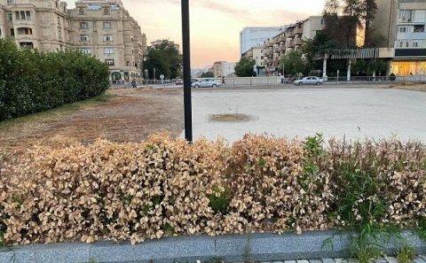 """""""Atatürk"""" parkının bərbad hissəsi: kimə satılıb? – Foto"""